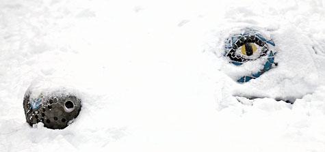 Snow Dragon - December 2008